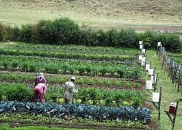 Small Picture 77 best Irrigation images on Pinterest Garden ideas Irrigation