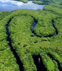 Resultado de imagen para fotos de manglares