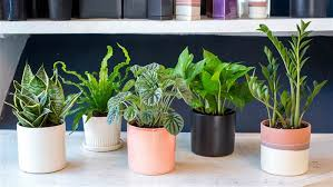 samantha okazaki today best office plants no sunlight