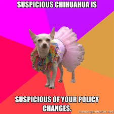 Suspicious Chihuahua is Suspicious of your policy changes ... via Relatably.com