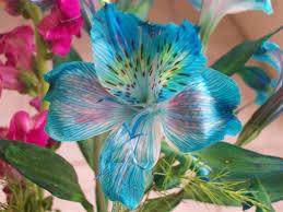 Resultado de imagen para flores