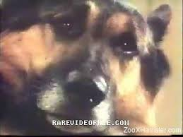 animals-porno-video Videos / Page 4 / ZooXhamster.com