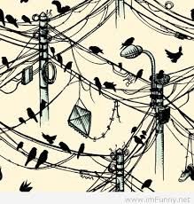 Image result for birds on telephone wires