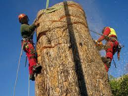 Risultati immagini per taglio alberi