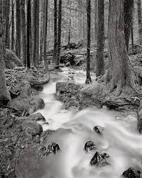 Image result for black and white forests