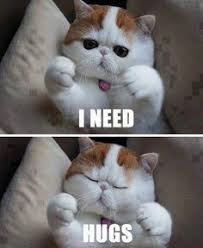 Exotic shorthairs on Pinterest   Exotic Shorthair, Cat Breeds and Cat via Relatably.com