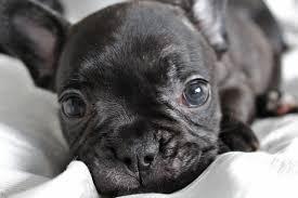 Male <b>Dog</b> Names: Top 100 Boy <b>Dog</b> Names Updated for 2020