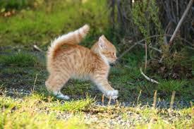 <b>Fun</b> Facts about <b>Pets</b>, Animals, <b>Cats</b> & <b>Dogs</b>