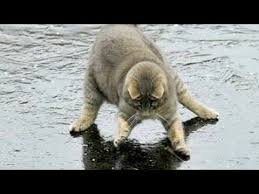 You will LAUGH SO HARD that YOU WILL FAINT - <b>FUNNY CAT</b> ...