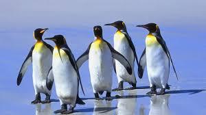 Resultado de imagen de Pinguinos