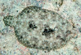<b>Camouflage</b> - Wikipedia