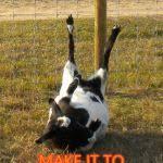 Fainting Goat Meme Generator - Imgflip via Relatably.com