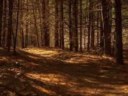 Tunnel1.jpg - Counseling MindfulnessCounseling Mindfulness