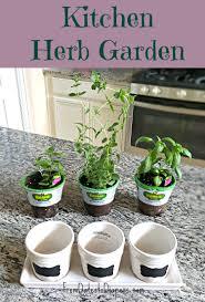 Kitchen Windowsill Herb Garden Garden Design Garden Design With Grow Your Own Windowsill Herb