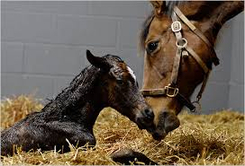 Image result for newborn foal