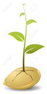Image result for plant seed cartoon
