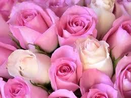 صور زهور رائعة images?q=tbn:ANd9GcT