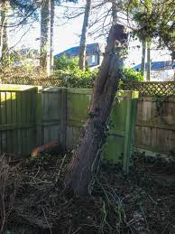 call out work cms tree services call out work