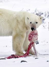 polar bears and the animal cannibals