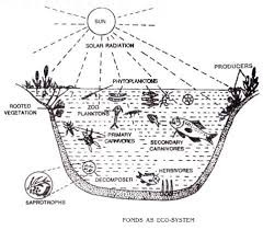 aquatic ecosystem and terrestrial ecosystem  explained with diagram ponds as eco system