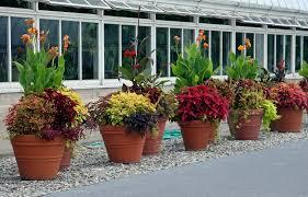 outdoor patio plants