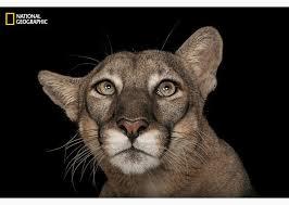 1000+ ideas about Animal Photography on Pinterest   Pet Pet ...