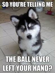 Puppy Meme on Pinterest | Funny Puppy Memes, Funny Dog Memes and ... via Relatably.com