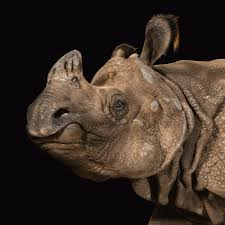 n rhinoceros national geographic