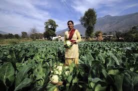 an essay on farming in