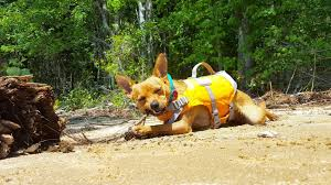 <b>Hurtta Life Savior</b> - THE life jacket for active dogs - Life With Mutts