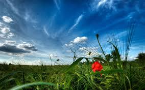 لكل محبي صور الطبيعة  اكبر تجميع لصور الطبيعة Images?q=tbn:ANd9GcTODcDrwsJWkVrLqPN6lOEOxsoalSP7anedE3JWWqwxEErHbZZw
