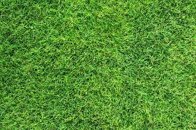 Models Grass Texture Stock Photo S Inside Perfect Ideas