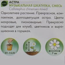 <b>Астра</b> Geolia «Музыкальная шкатулка» смесь окрасок в ...