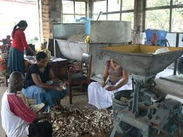 Image result for garri processing