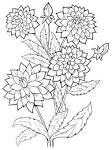 Раскраска хризантема