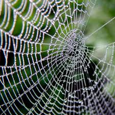 Image result for spiders.