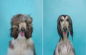 Resultado de imagem para antes e depois engraçado