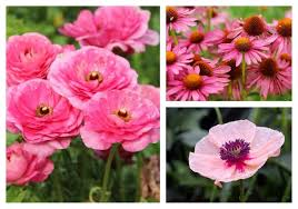 30 Types of <b>Pink</b> and Fuchsia <b>Flowers</b> (A-Z Photos)