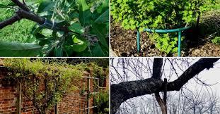 <b>Подпорки</b> для веток <b>деревьев</b> и кустов – какие бывают и как ...