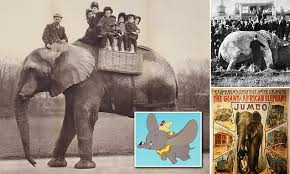 Tragic true story of Jumbo, the <b>real</b> life alcoholic circus <b>elephant</b> that ...