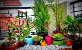 modern patio bushes