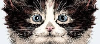 Одежда с котятами купить, товары с принтом котят в интернет ...