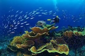 أكبر تجميع لأجمل صور من اعماق البحار (سبحان الله الخالق العظيم) Images?q=tbn:ANd9GcTPT-dfAOZUQIrYbz9pyRMgf8RyutdEmZR59EJor6hXAImhACfU
