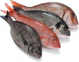 Resultado de imagen de fotos pescados y alumnos