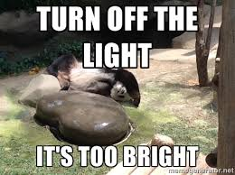 Turn off the light It's too bright - Lazy Panda Sleeping | Meme ... via Relatably.com