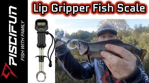 Piscifun <b>Lip Gripper Fish</b> Scale- Brook Trout - YouTube