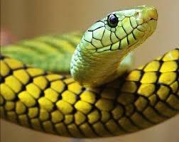 yılan resmi ile ilgili görsel sonucu