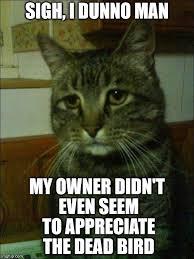 Depressed Cat Meme Generator - Imgflip via Relatably.com