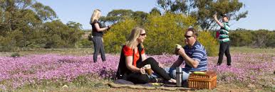 Where to see wildflowers in Western Australia | Australia's Golden ...