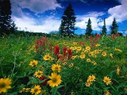 essay on beauty of nature